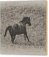 Galloping Horse Wood Print
