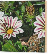 Garden Beauties Wood Print