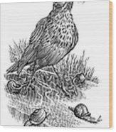 Garden Bird Catching Snails, Artwork Wood Print by Bill Sanderson