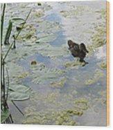 Garden Duck Wood Print