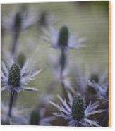 Garden Facets Wood Print