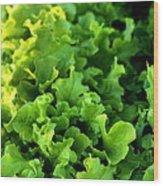 Garden Fresh Salad Bowl Lettuce Wood Print