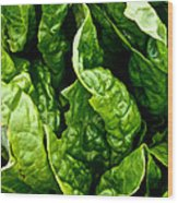 Garden Fresh Wood Print by Susan Herber