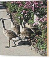 Garden Geese Parade Wood Print