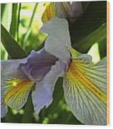 Garden Iris Wood Print