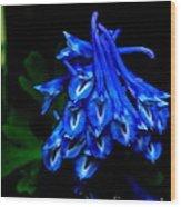 Garden Jewel Wood Print