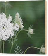 Garden Lace Group By Jammer Wood Print