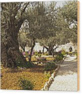 Garden Of Gethsemene Jerusalem Wood Print