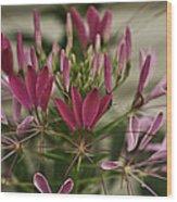 Garden Stinkweed Flower 1 Wood Print