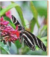 Garden Zebra Longwing Wood Print
