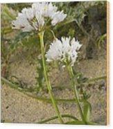 Garlic (allium Sub Villosum) Wood Print