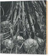 Garlic Bulbs Wood Print