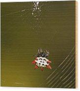 Gasteracantha Elipsoides Wood Print