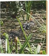 Gator Sunning Wood Print