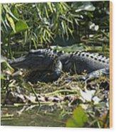 Gator Time Wood Print