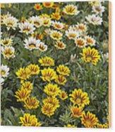 Gazania Gazania Rigens Flowers Wood Print