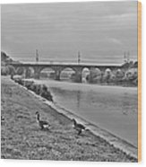 Geese Along The Schuylkill River Wood Print