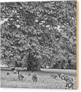 Geese By The River Wood Print