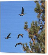 Geese In Tahoe Wood Print by Ernie Claudio