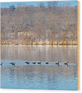 Geese In The Schuylkill River Wood Print