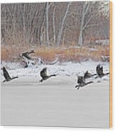 Geese Take Flight Over The Maumee River Wood Print