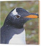 Gentoo Penguin Head Shot Wood Print