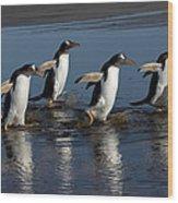 Gentoo Penguin Pygoscelis Papua Group Wood Print