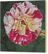 George Burns Rose Wood Print