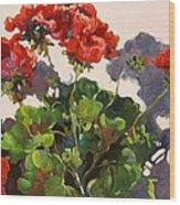 Geraniums And Shadows Wood Print
