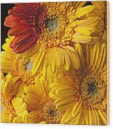 Gerbera Daisy With Orange Petals Wood Print