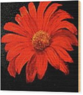 Gerbera Wood Print by Heather Matthews