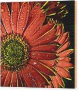 Gerbera Orange Wood Print