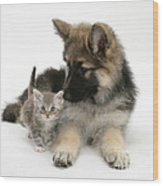 German Shepherd Dog Pup With A Tabby Wood Print
