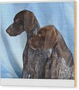 German Shorthaired Pointer 306 Wood Print