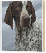 German Shorthaired Pointer 442 Wood Print