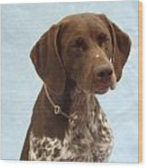 German Shorthaired Pointer 740 Wood Print