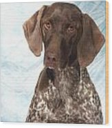 German Shorthaired Pointer 953 Wood Print