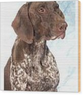 German Shorthaired Pointer 960 Wood Print