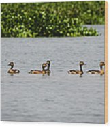 Get Your Ducks In A Row Wood Print