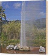 Geyser Napa Valley Wood Print by Garry Gay