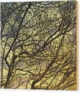 Ghosts Of Crape Myrtles Wood Print by Judi Bagwell