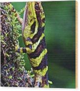 Giant Anole Dactyloa Microtus Male Wood Print