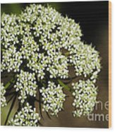 Giant Buckwheat Flower Wood Print