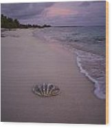 Giant Clam Shell On A Deserted Beach Wood Print