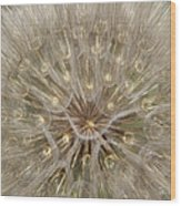 Giant Dandelion Wood Print