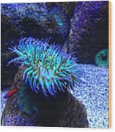 Giant Green Sea Anemone Wood Print