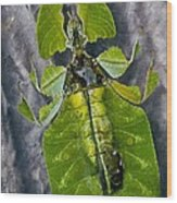 Giant Leaf Insect Wood Print