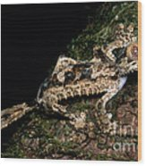 Giant Leaf Tail Gecko Wood Print