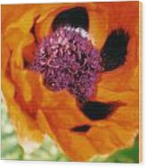 Giant Orange Poppy Wood Print