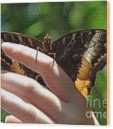 Giant Owl Butterfly In Hand Wood Print
